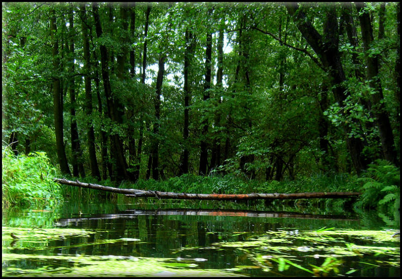 Spree Forest