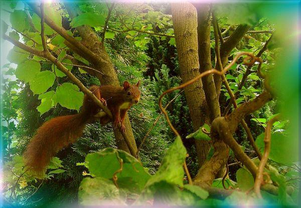in search of hazelnuts