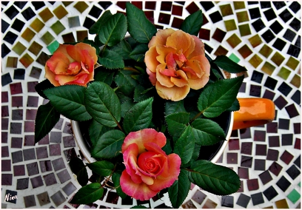 mosaic roses