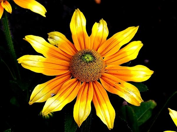 yellow orange flower