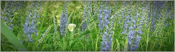 wild flowers I