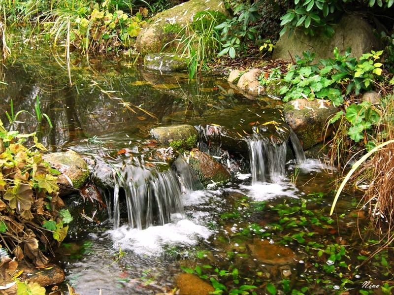 water, plants and stones
