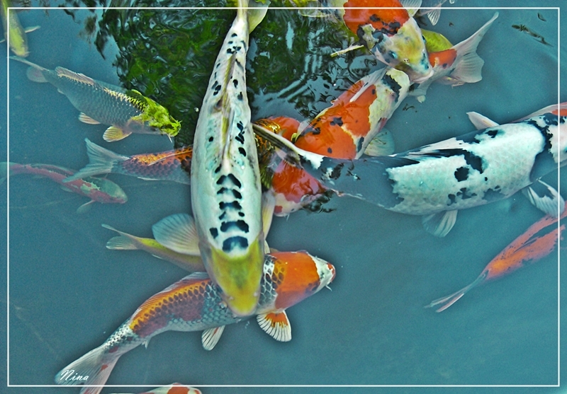 fishes II