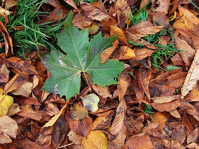 foliage I