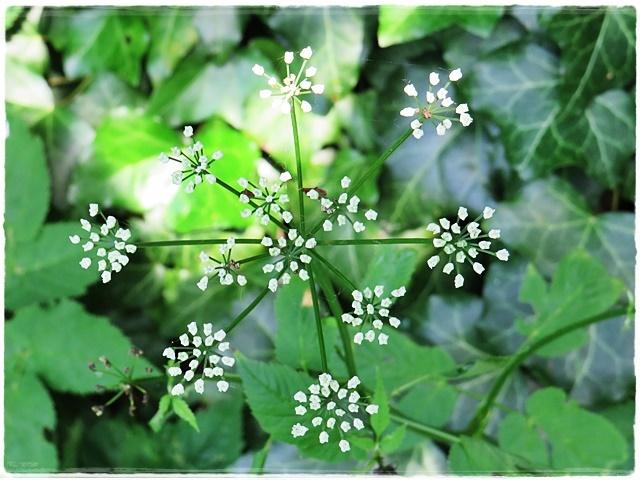common plant