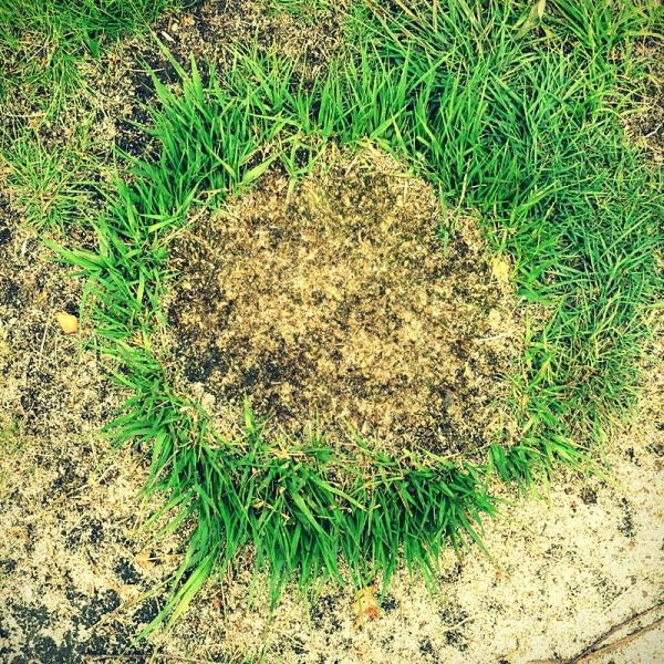 grass, contrast