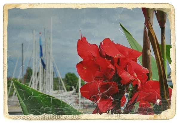 red flower, nostalgic