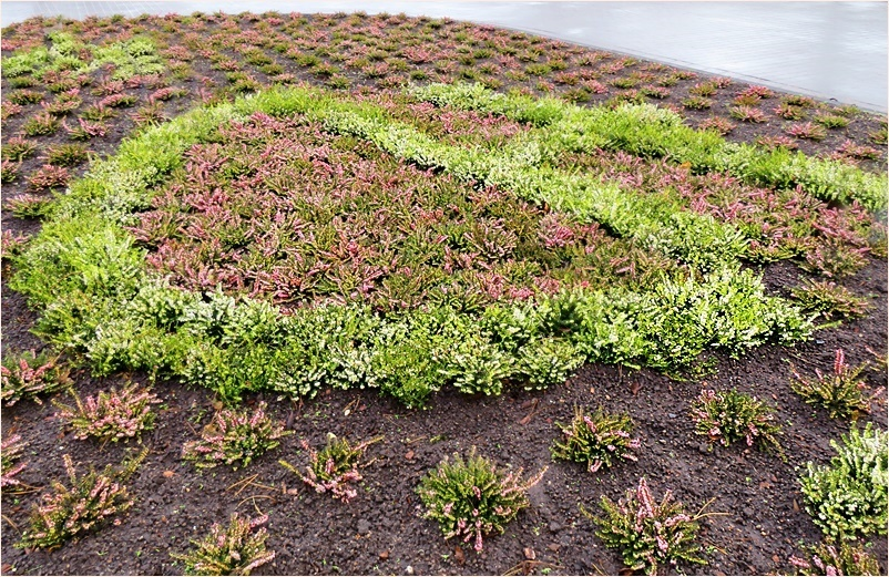 anchor shaped flower bed
