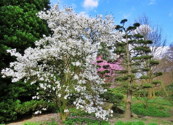 springtime I