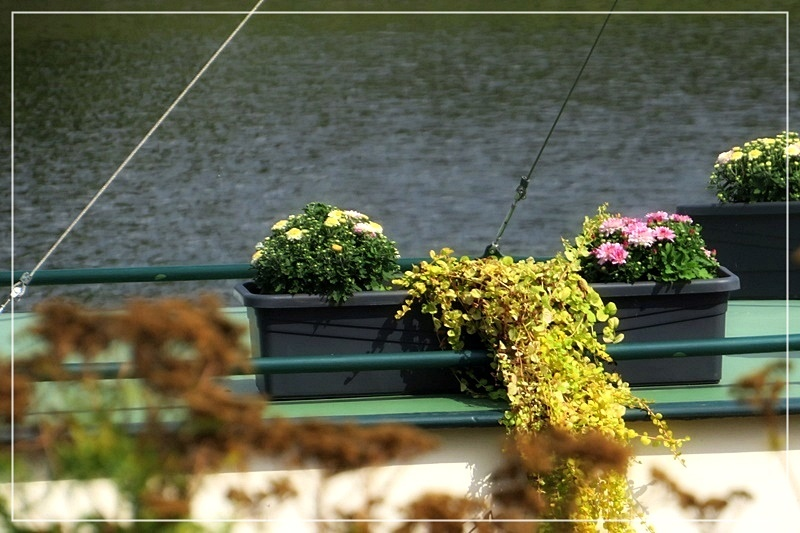 flowers on the houseboat