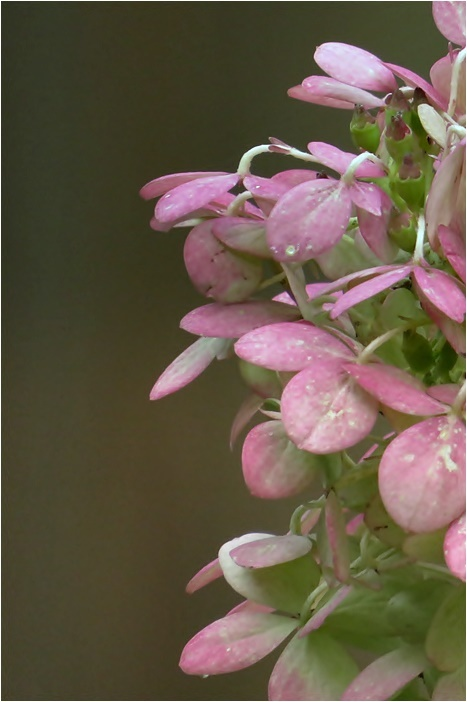 tender pink