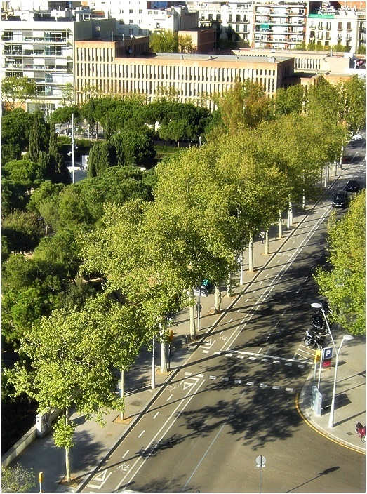 line of trees in the city