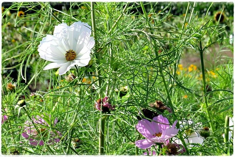 delicate flowers