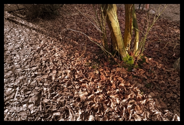 foliage from the walnut tree