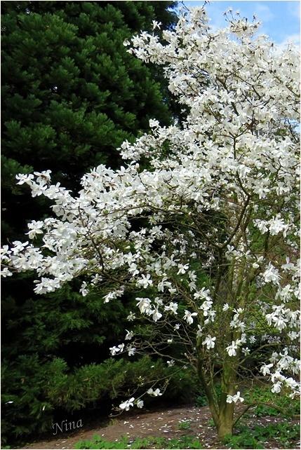 springtime II