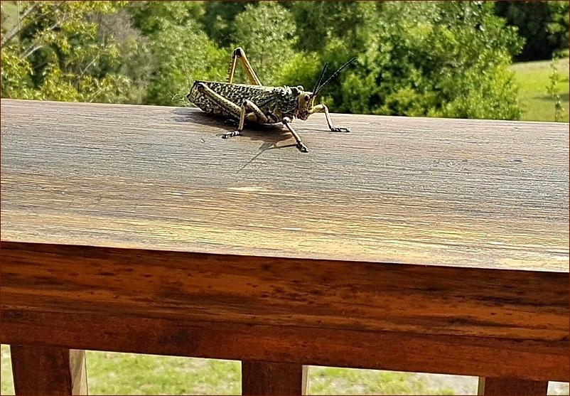 jumping visitor