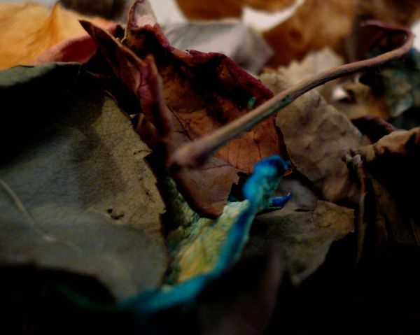 My ColouRfull Autumn