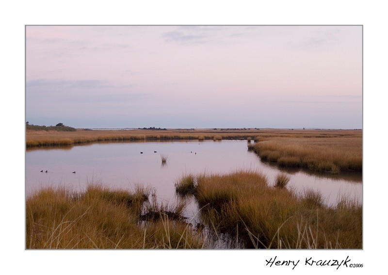 Folger's Marsh, Nantucket by Henry Krauzyk