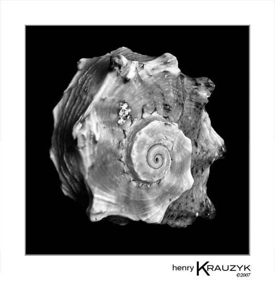 Shell No. 15 by Henry Krauzyk ©2007