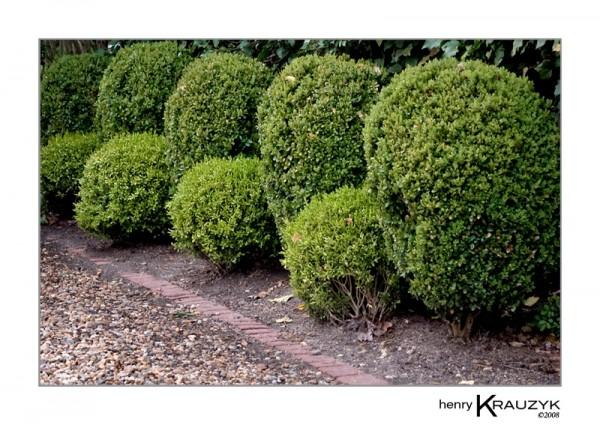 Hedgerow, Martha's Vineyard by Henry Krauzyk@2008