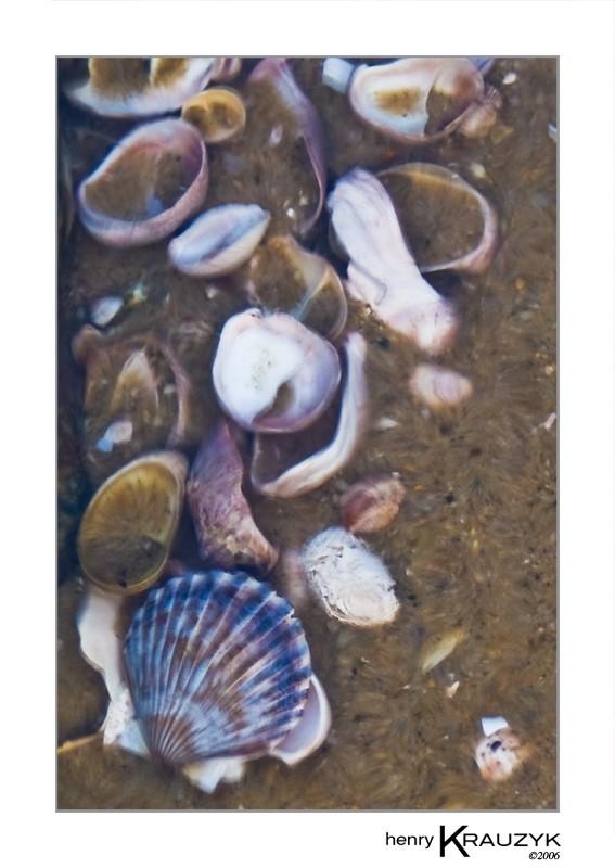 Tidal Pool, Nantucket by Henry Krauzyk ©2005