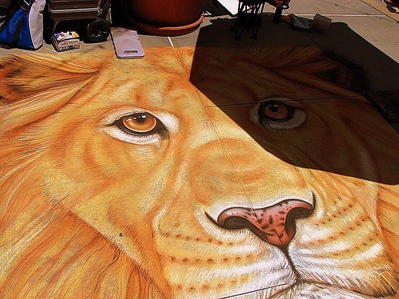 Shadowed Lion