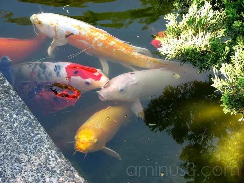Fish are Friends