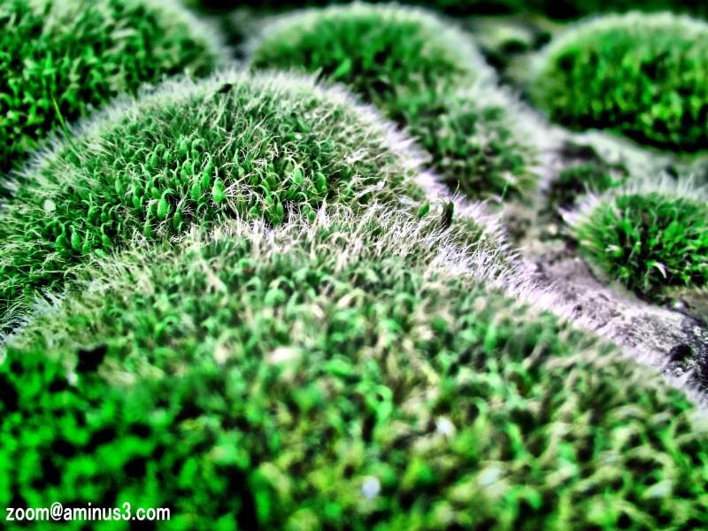 En Vert... Et Contre Tous...