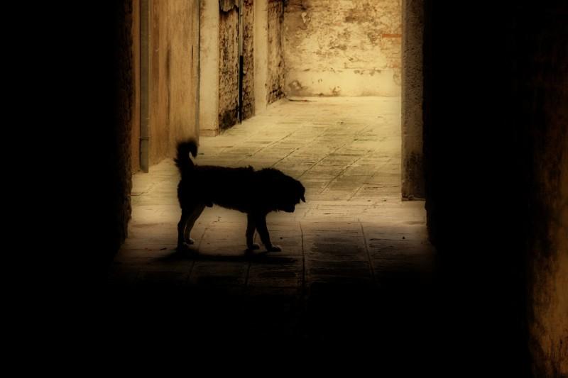 Il Cane Zippo  (Venise/Venice)