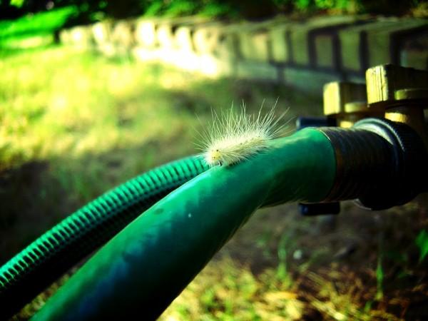 fuzzy wuzzy was a worm