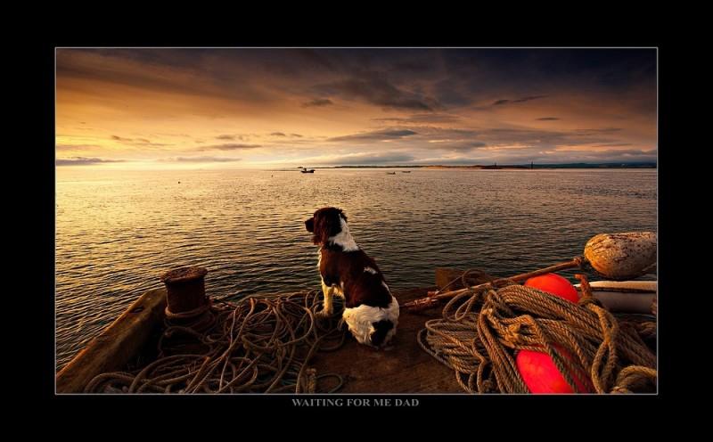 Holy Island Dog
