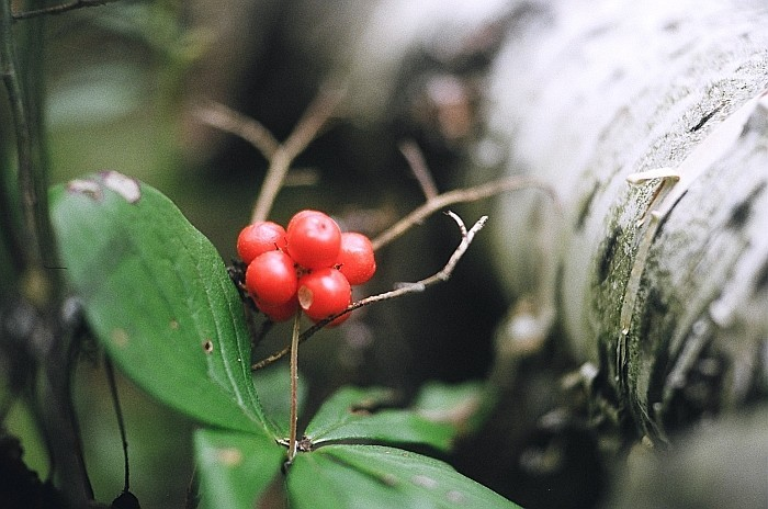 twig & berries