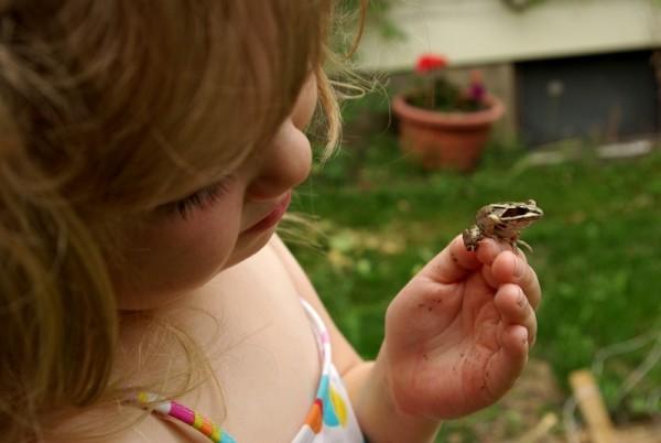 Madeline frog