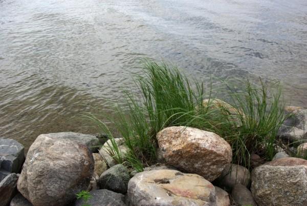 Grass between rocks on lake