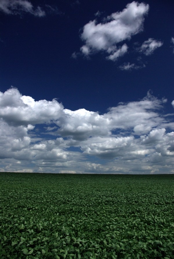 clouds and crop