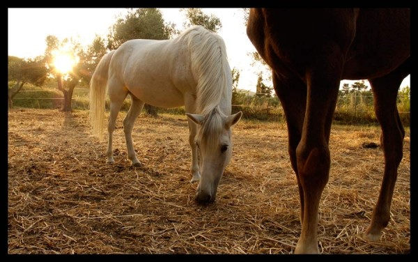 Silvana's Horses
