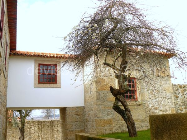 Solar do Dão - the tree