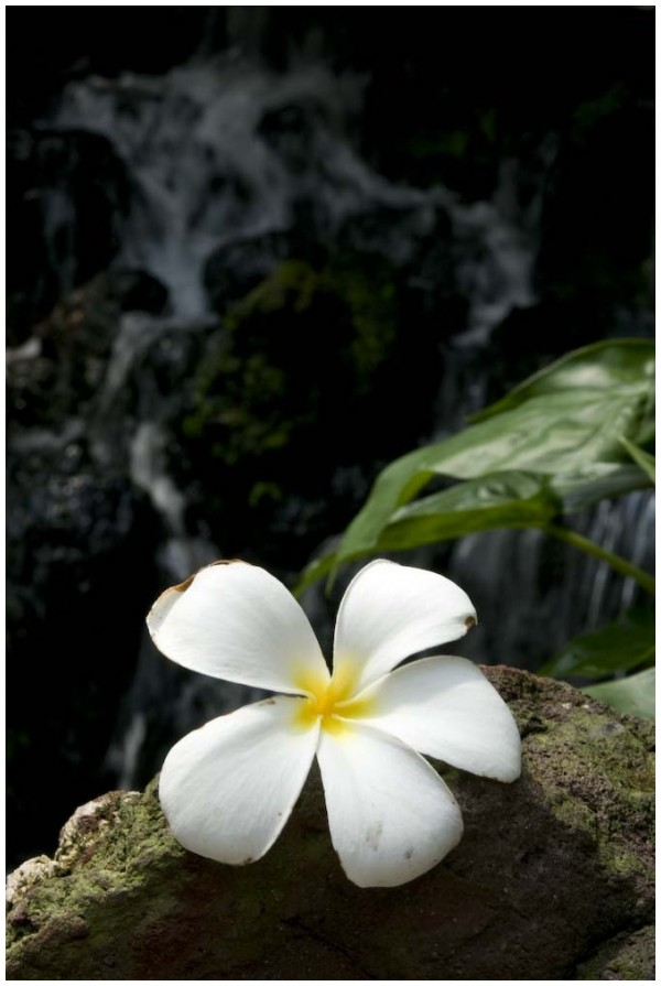 Another lonely flower...