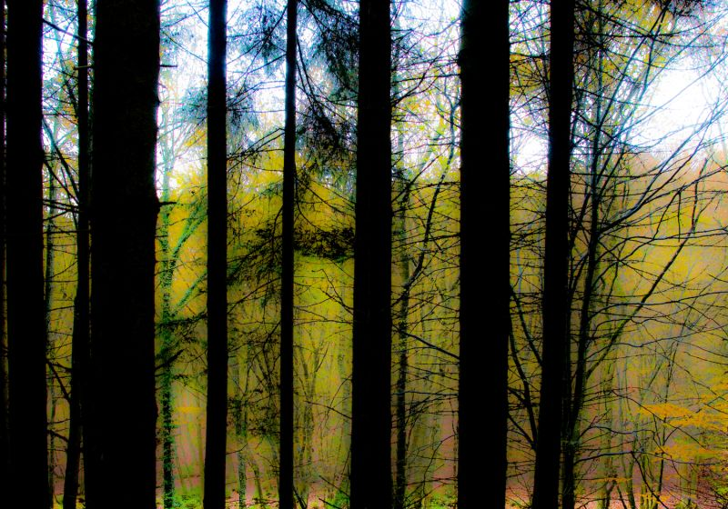 More trees in Eifel