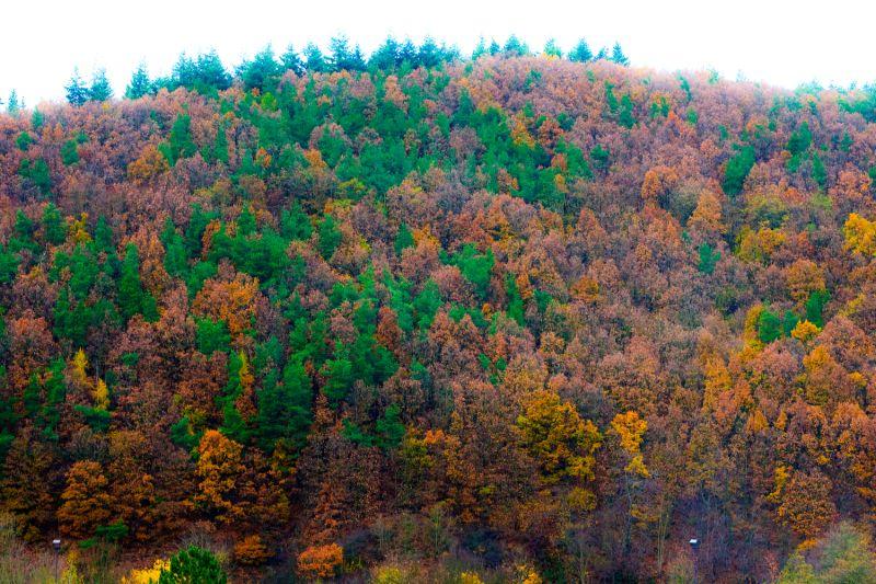 More autumn colors