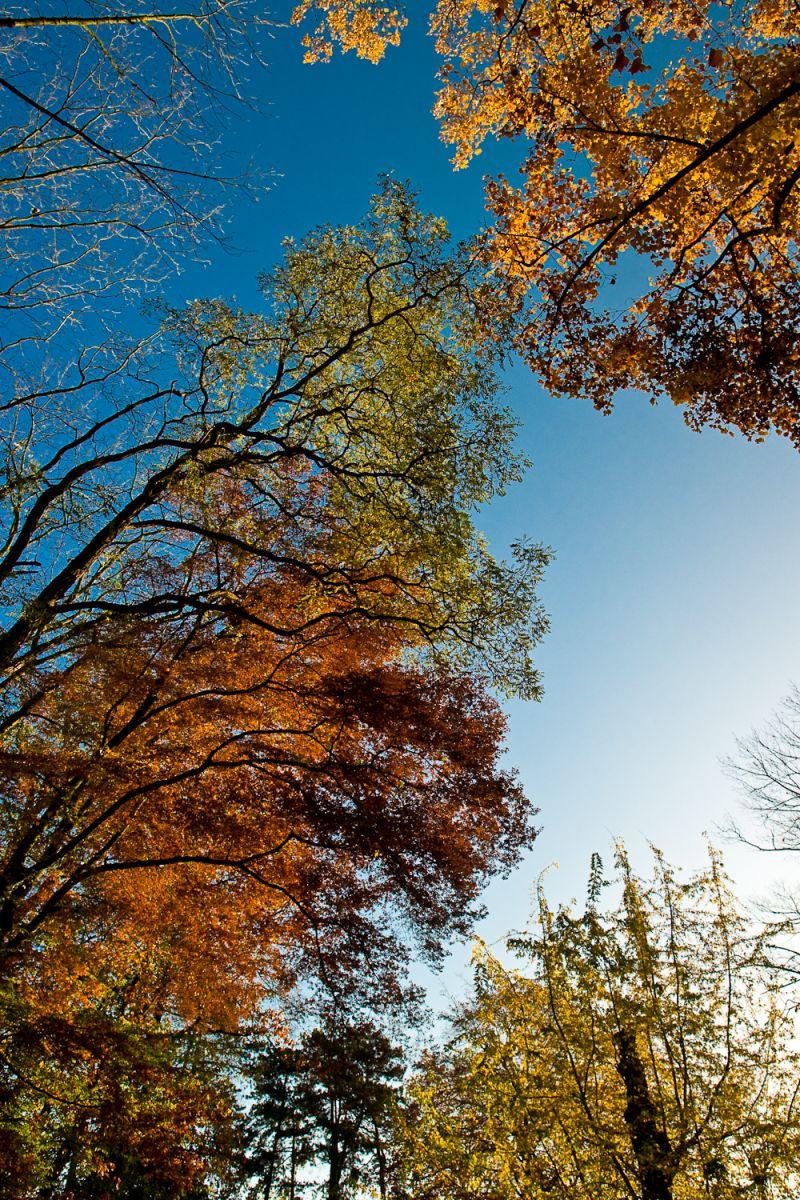 Autumn colours 3