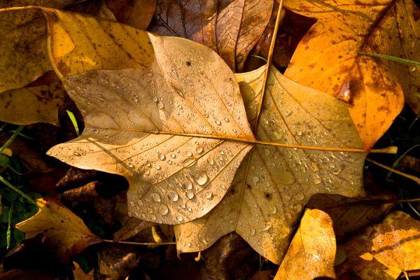 Autumn colours 4