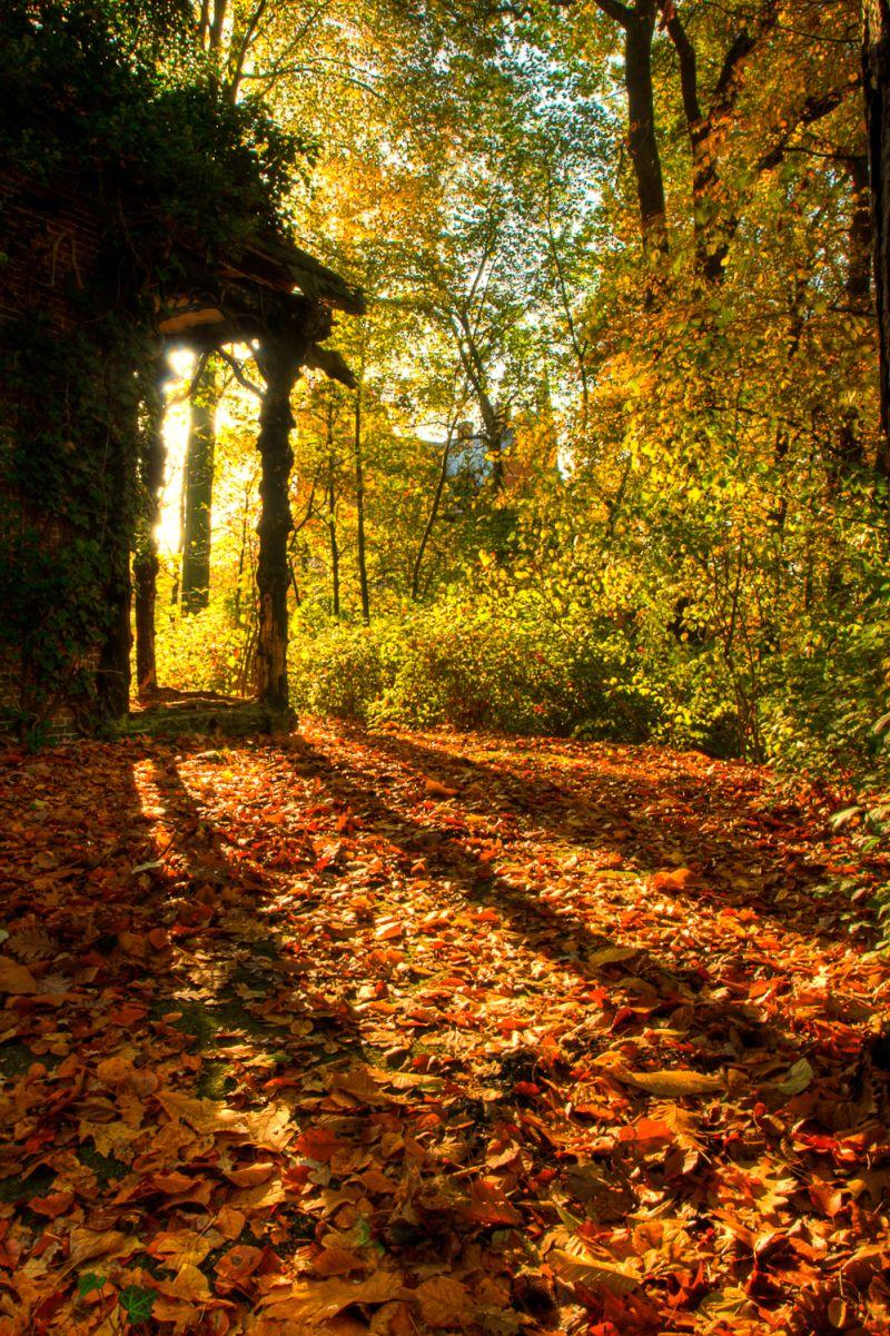 Autumn colours 9