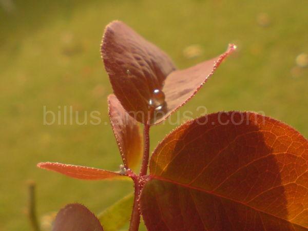 Drop of Rain left over Leaf