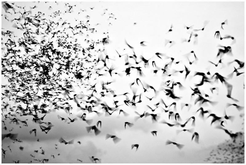 Bat Vortex