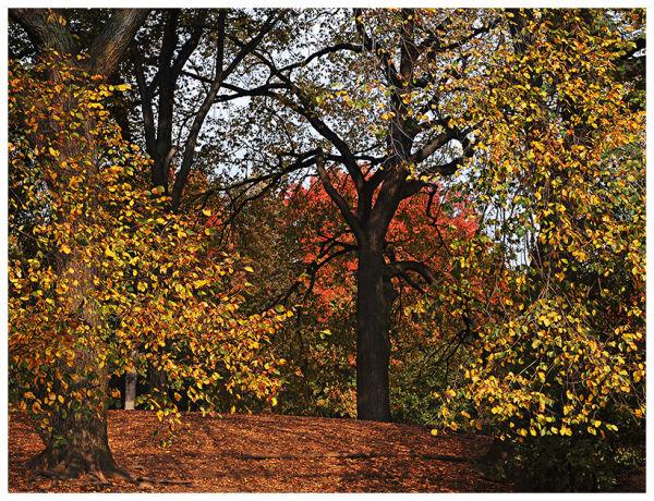 Brooklyn Prospect Park