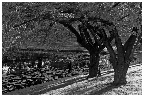 Brooklyn Green-Wood cemetery fall