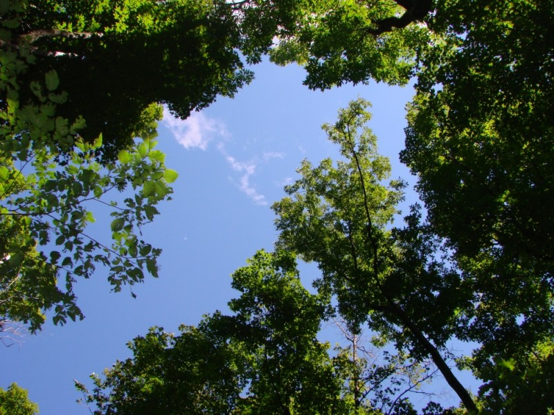 Looking up at the sky