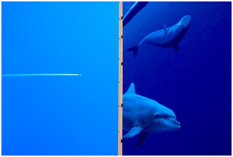 dolphin dauphin sky ciel bleu blue mer sea