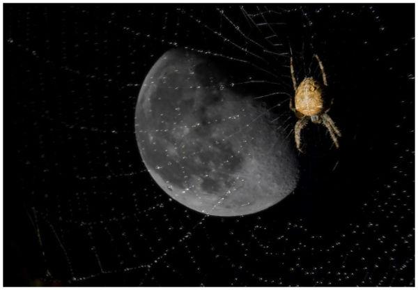 Araignée du soir..